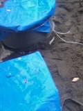 浄化槽設置工事