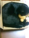 段ボールで寝る猫