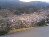 四国中央市の桜  花見スポット  三島公園