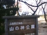 四国中央市花見スポット  豊岡  山の神公園