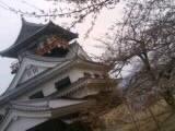 四国中央市の桜 花見スポット 城山公園