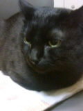 ミーコと野良猫
