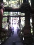 二十年ぶりくらいに祖谷のかずら橋を渡る